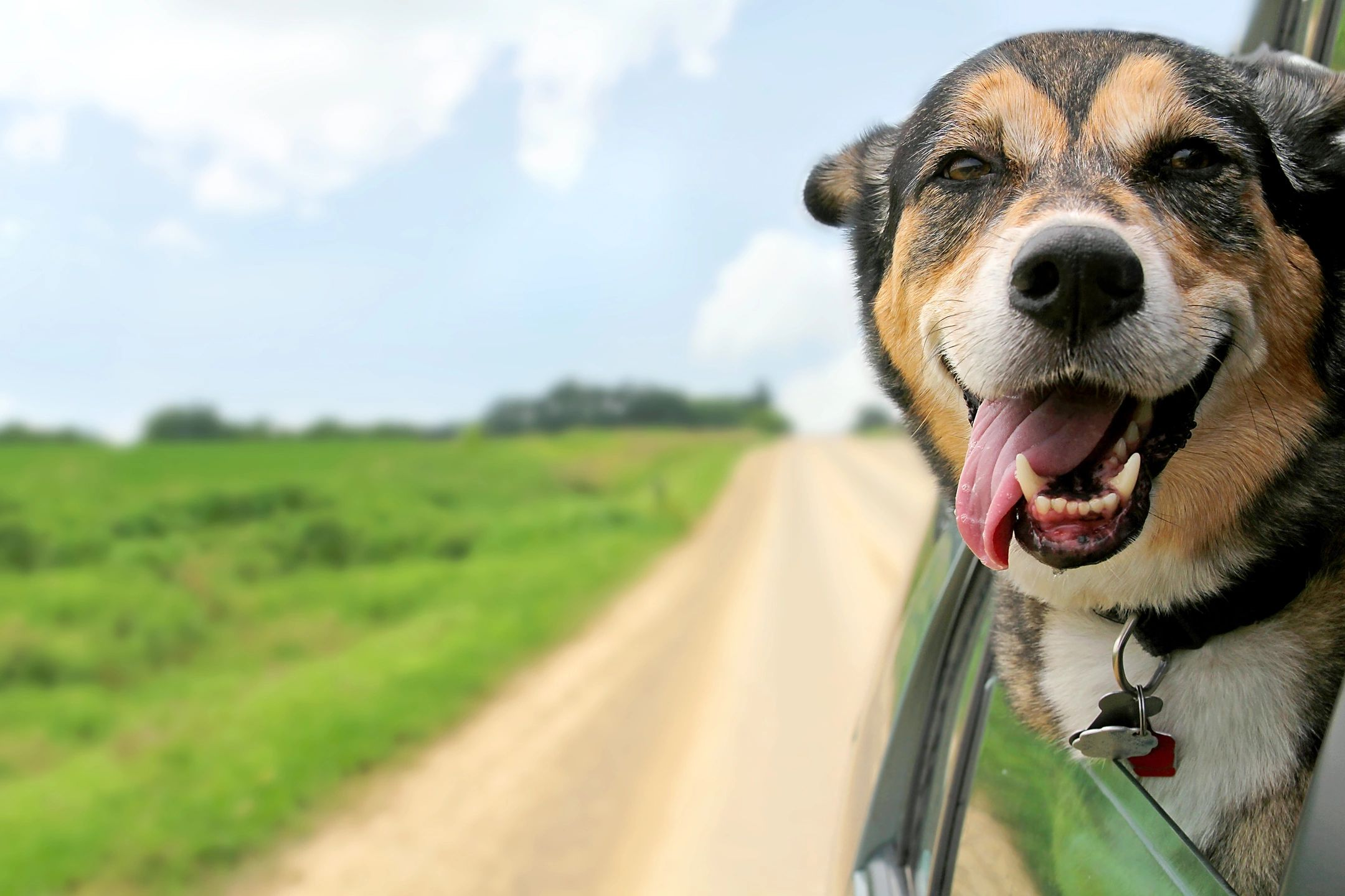 A Dog excited for Mobile Dog Grooming