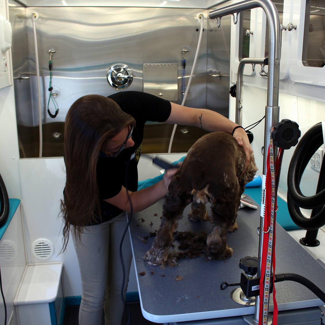 Mobile dog grooming sttersburg barks and recreation photo gallery solutioingenieria Images