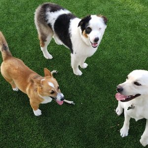 Doggy Daycare - Barks and Recreation