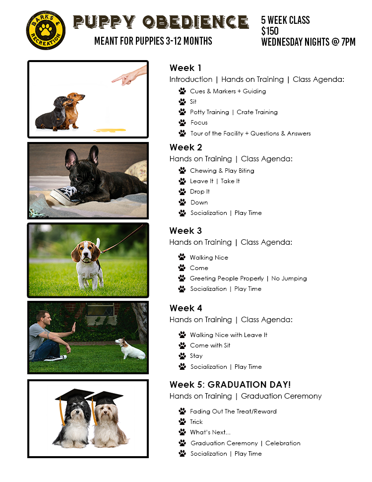 Puppy Obedience 1 Agenda Web Barks And Recreation