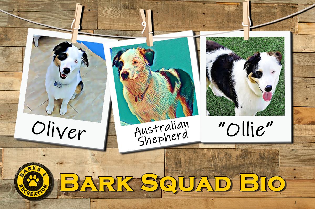 Bark Squad Bio - Oliver