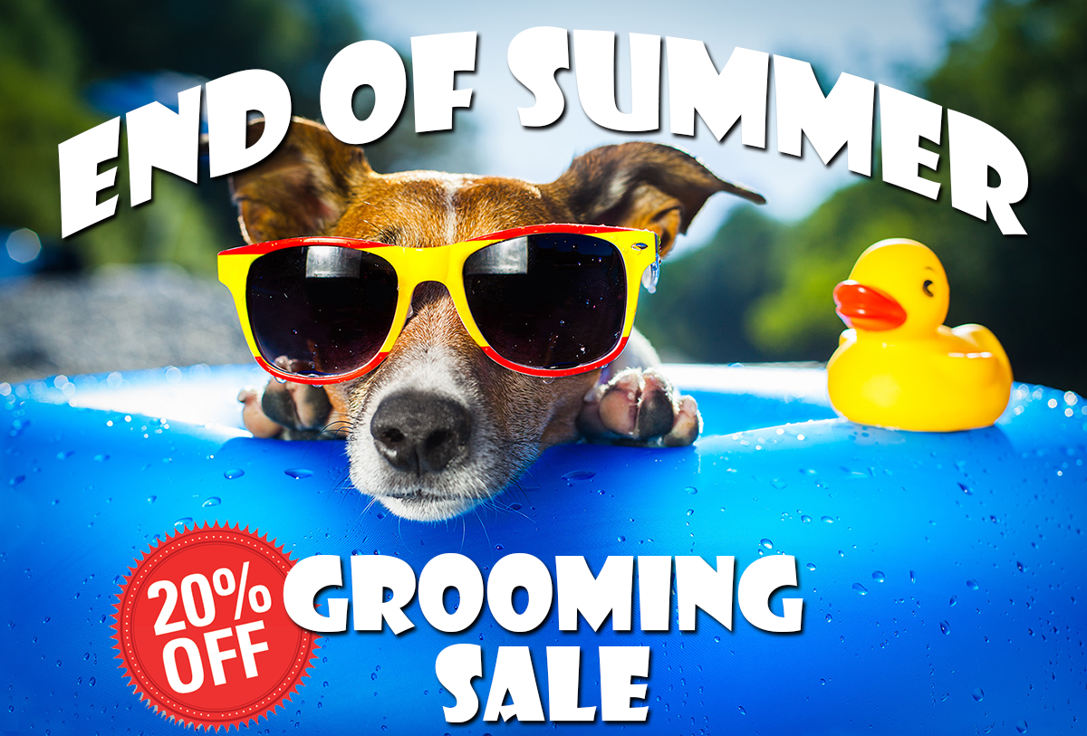 End of Summer Grooming Sale - Dog Grooming - Seminole Florida - Tampa Bay - Pinellas County