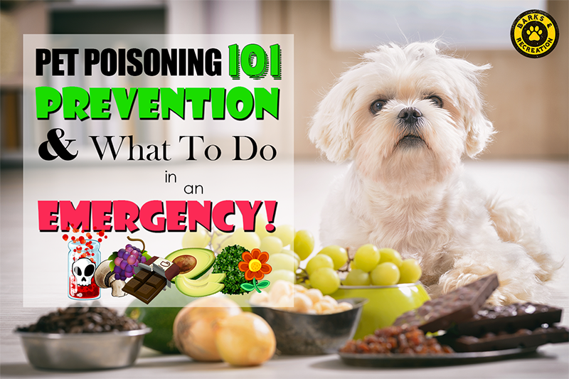 Pet Poisoning - Prevention and What to do in an Emergency