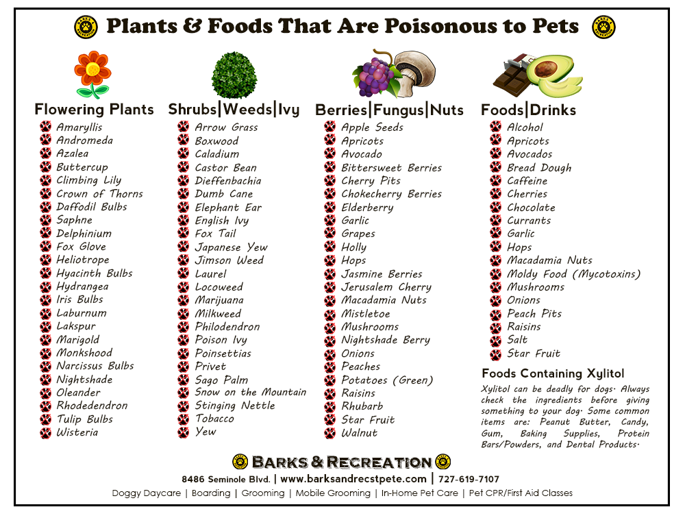 Poisonous Plants & Foods for Pets