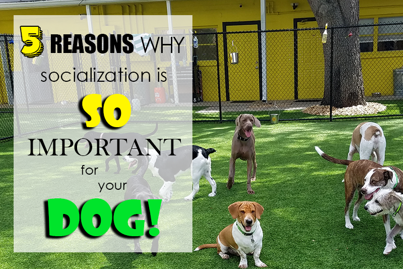 5 Reasons Why Socialization Is So Important For Your Dog