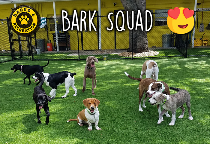 The Bark Squad in Dog Daycare at Barks & Recreation